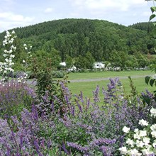 Beautiful landscape surrounding Lucksall Caravan & Camping Park in the stunning Wye Valley