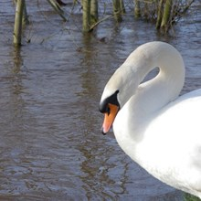 Lucksall is located on the banks of the River Wye, offering excellent opportunities for wildlife photography.