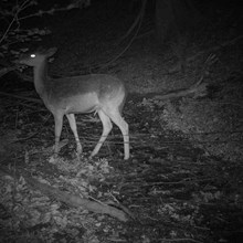 A deer captured in the woodlands near Lucksall Caravan and Camping park.