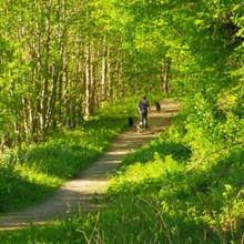 Woodland walks from Lucksall Caravan Park