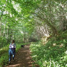 Lucksall Woodland Walks, Herefordshire.jpg
